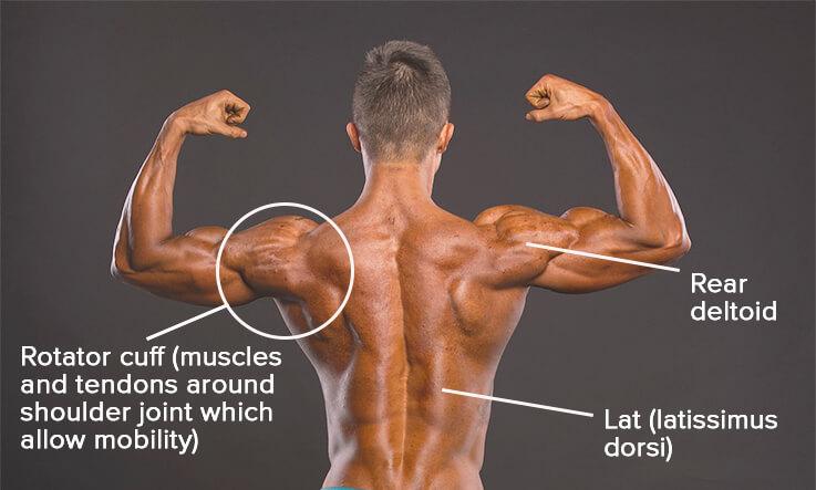 Shoulder stretches - shoulder and back muscles